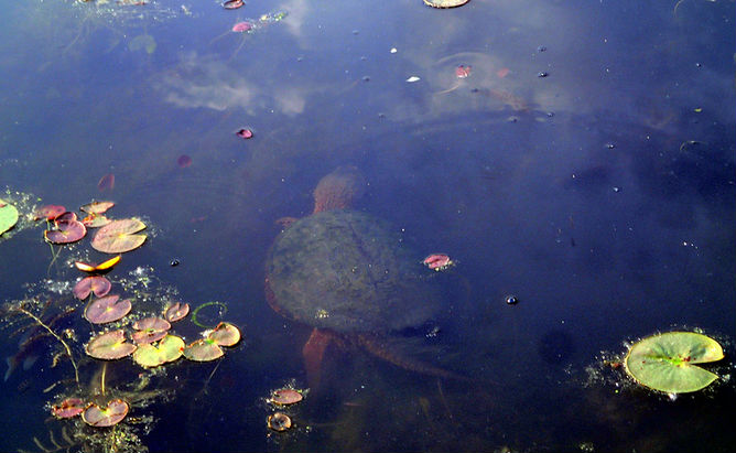 Wingfoot Lake, Ohio: Tires, turtles and neo-shamanism in small town Ohio