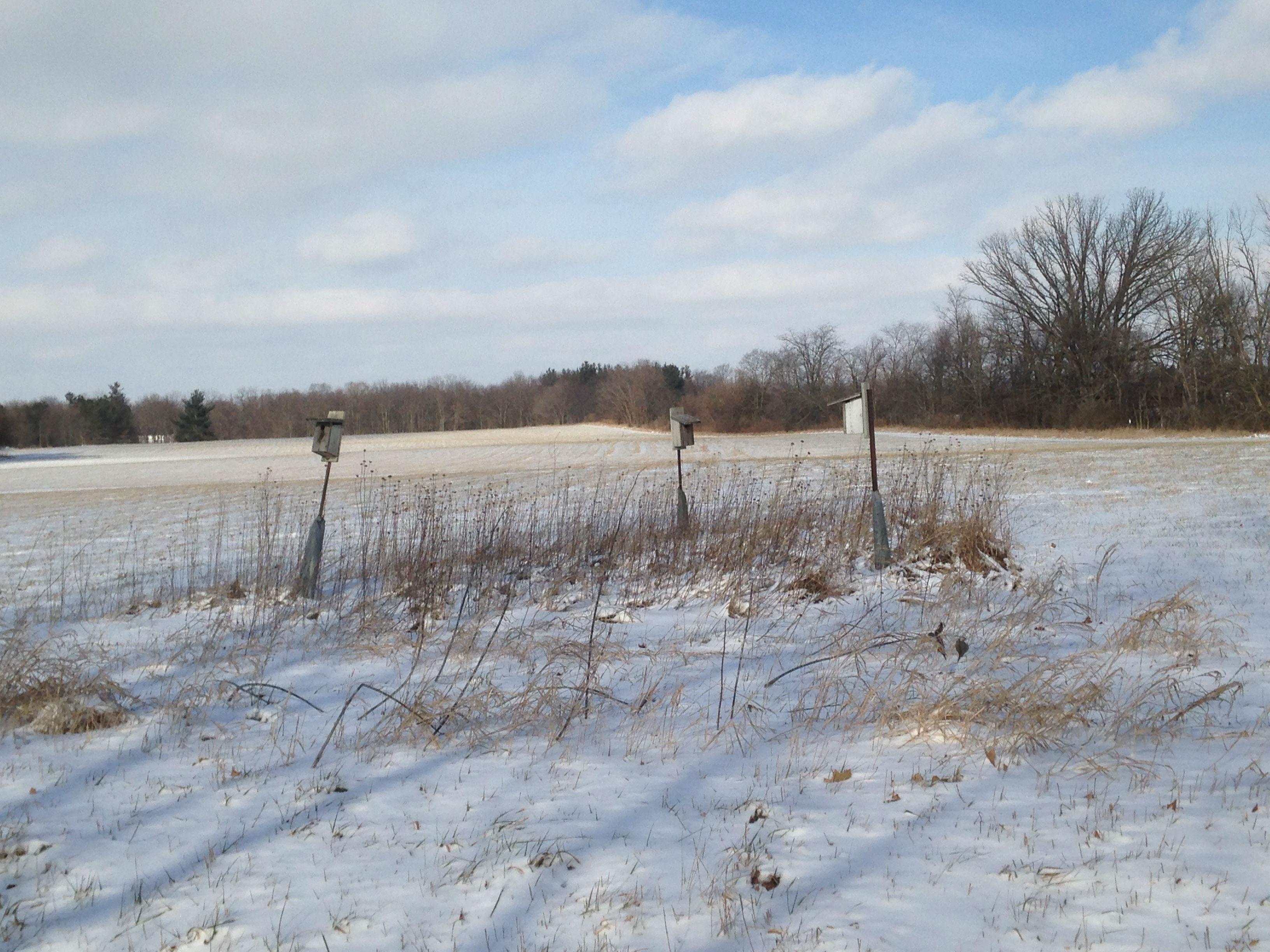 Bluffton University Nature Preserve, Ohio: Winter Liminal