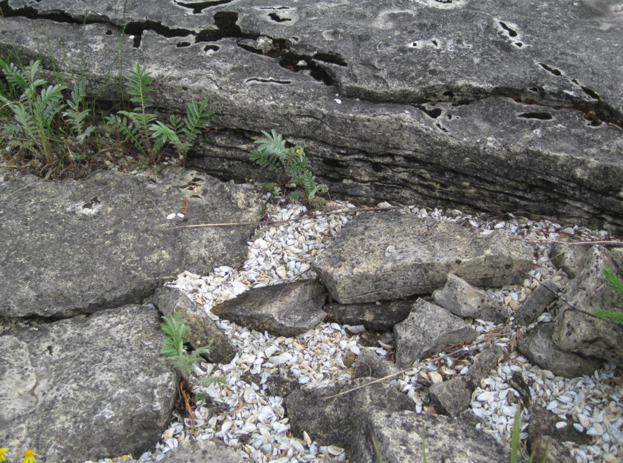 Seul Choix Point, Michigan: Of Shells and Strata, Time and Terrain